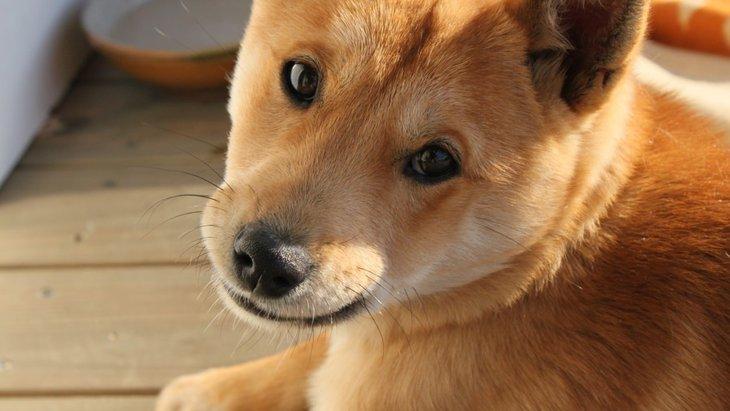 犬に赤ちゃん言葉を使ってしまう3つの理由