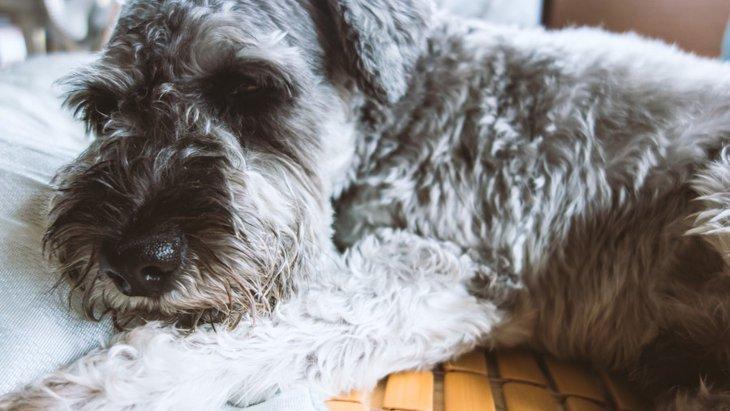 犬の「ガン」初期~末期の代表的な症状