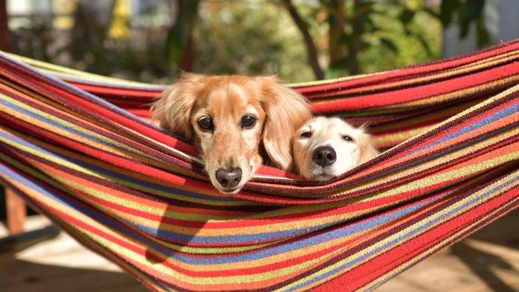 犬の多頭飼いは『同じ犬種』にするべき?どんな基準で迎え入れればいいの?