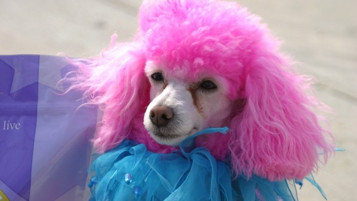 犬にカラーリングするのは危険?やりすぎれば虐待になることも