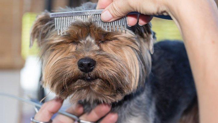 なぜトリミングが苦手な犬がいるの?主な理由と対処法