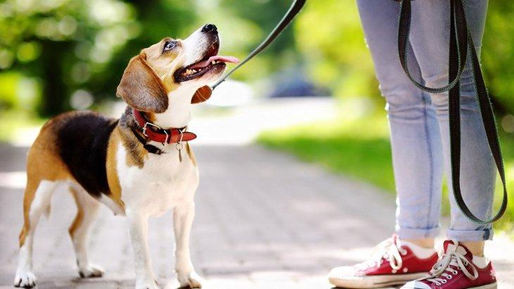 犬の『息が異常に荒い』のは危険なサイン!?6つの原因と適切な対処法