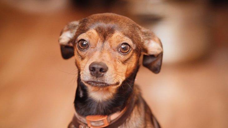 犬が飼い主の帰宅時、喜んでくれない時の心理4つ
