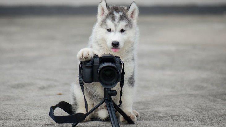 犬の写真撮影でやらない方が良いNG行為5つ