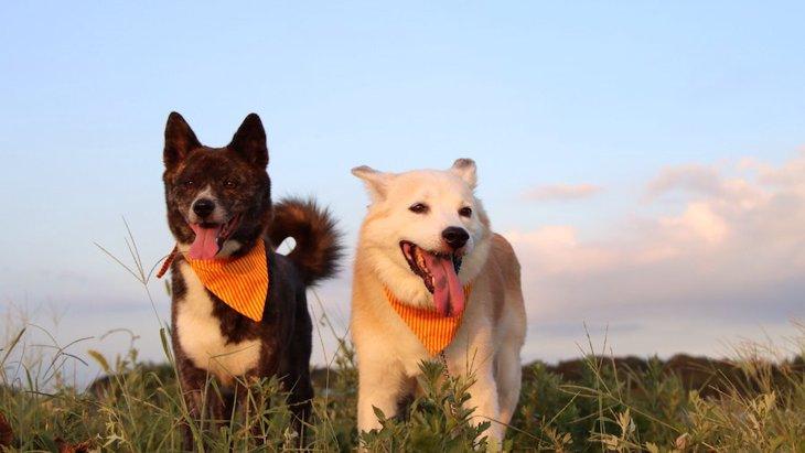 犬の多頭飼いで後輩犬が先輩犬の行動を真似する理由2つ
