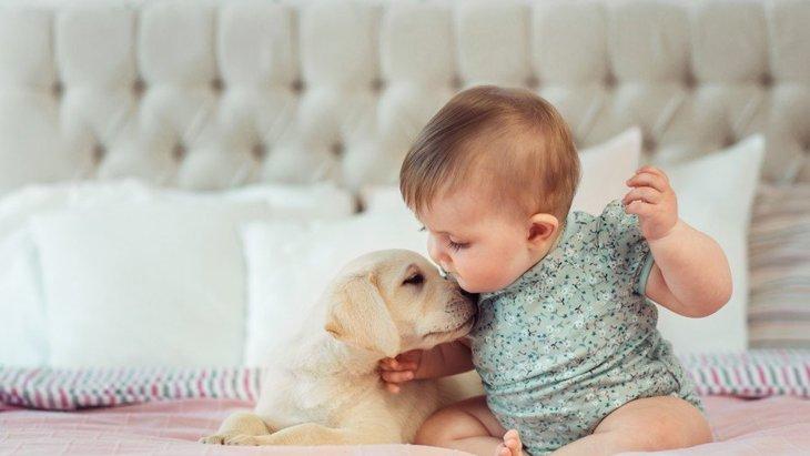 知ってた?犬にも使える『赤ちゃん用品』5選