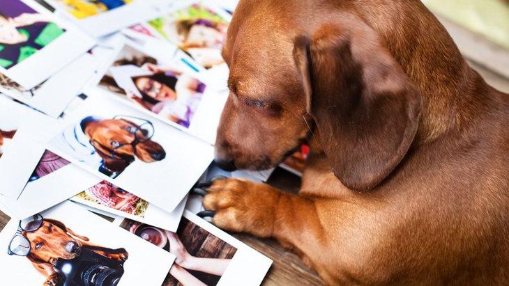愛犬との思い出を残そう!手作りアルバムの作り方