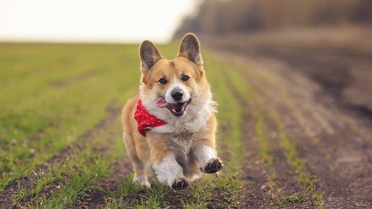 犬が散歩ではしゃぎすぎて困る…2つのやめさせる方法と注意点