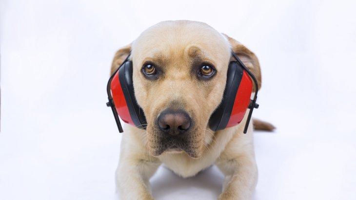 犬 が 反応 する 音