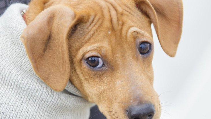 犬が『視線』で飼い主に伝えていること3つ