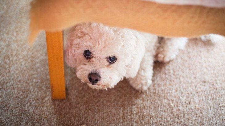犬が危険を察知した時、とっさにする5つの行動とは