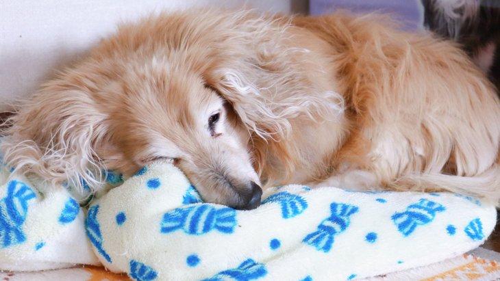老犬の最期に訪れる症状とは?飼い主にできること