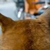 耳の毛抜きに注意!犬の耳毛の重要な機能!