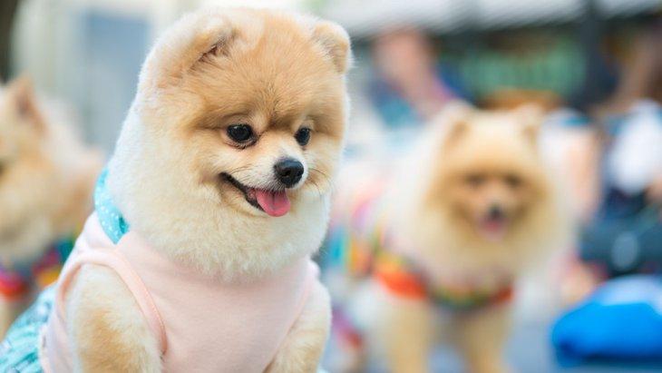 犬の発情期に気をつけたい注意事項