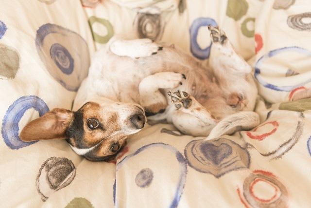 愛犬の幸福度を上げる4つの方法