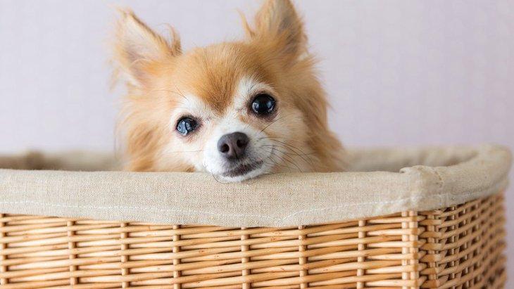 犬が涙を流して泣く理由とは?悲しんでいるときの行動や鳴き声の意味