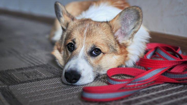 気づいてあげて!犬が『散歩を嫌がっている』時のサイン3選