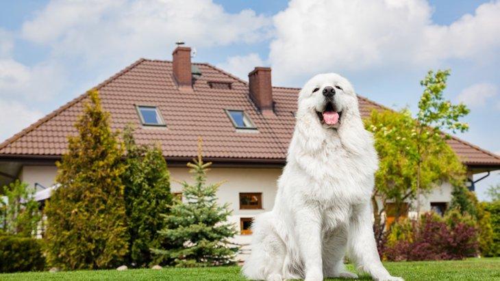都会と田舎、それぞれで異なる犬のライフスタイルの違い