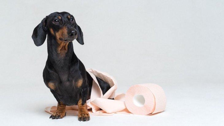 犬が隠れてトイレをする心理3選!改善するための方法は?