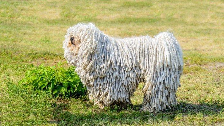 独特な見た目をしている犬種4選