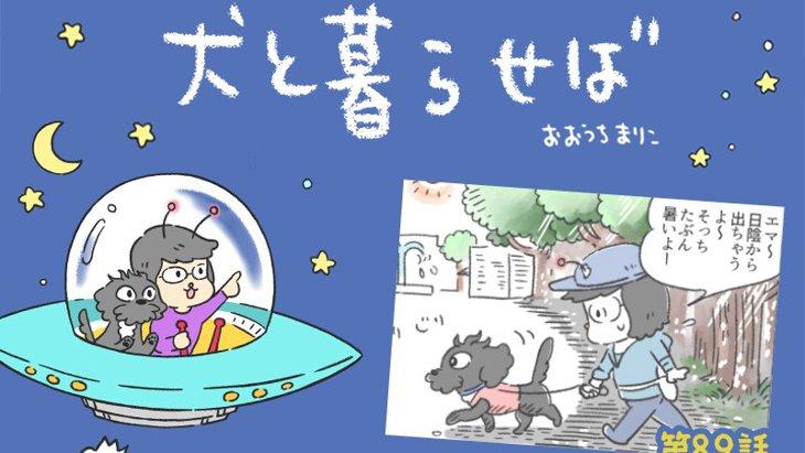 犬と暮らせば【第89話】「ヒナタ」