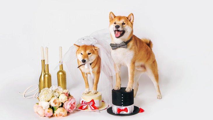 犬を飼うと『婚期』が遅れるのか?