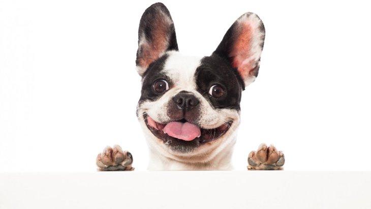 人気の『ブサカワ犬種』5選♡