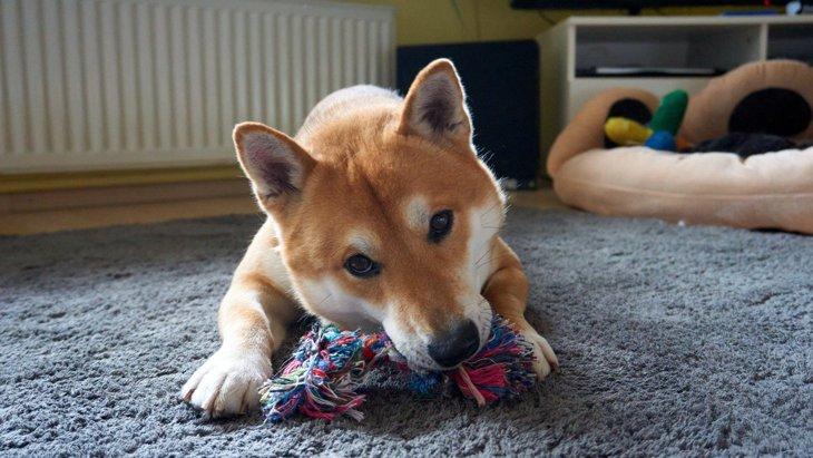 犬が『楽しいと感じる遊び方』4選
