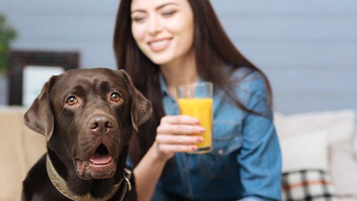犬に与えてはいけない飲み物まとめ
