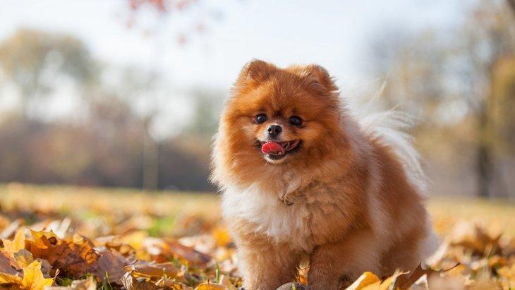 犬のお肌がカサカサになる原因と乾燥肌のためにできる対策