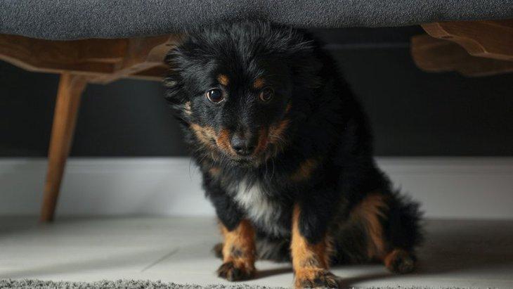 他の飼い主から『残念』と思われている犬の飼い主のダメ行動6つ