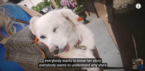 耳が聞こえず片目が潰れ殆どの歯がない犬…里親の元で幸せを感じてほしい