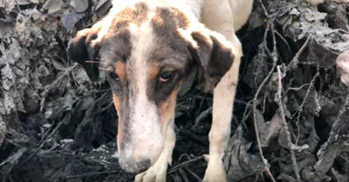 火山が噴火!林の中に取り残された犬をレスキュー!