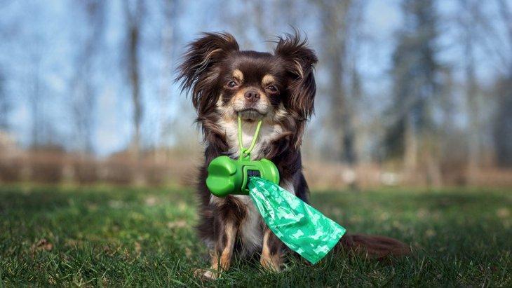 犬が散歩中にしたウンチを放置するとどうなる?飼い主なら必ず守りたいエチケット