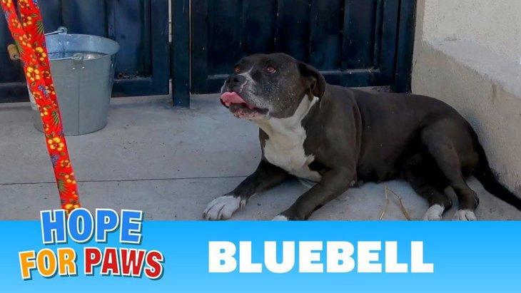 親切なお宅に居そうろうした犬を保護。体はガンに侵されていましたが…