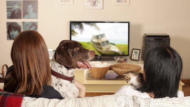 一緒にテレビを見るなら犬が最高?テレビと犬にまつわるアンケート結果
