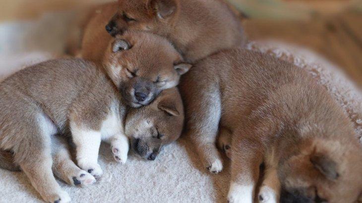 犬の幼齢個体を親等から引き離す理想的な日齢について