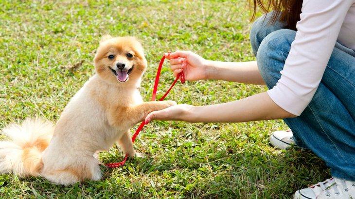 犬のしつけはやりすぎると逆効果?何分くらい続けられるの?