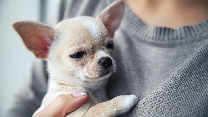 子犬が命の危険にさらされる!?よくあるシチュエーション3選