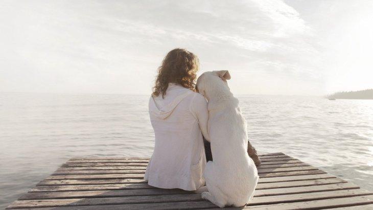 犬が飼い主に『ありがとう』と伝えている時のサイン3選