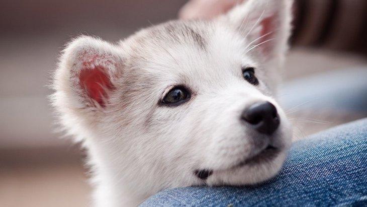 犬が飼い主の行動を真似する理由3つ