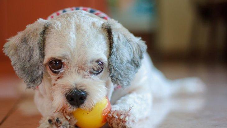 『気分屋な犬』の特徴5つ