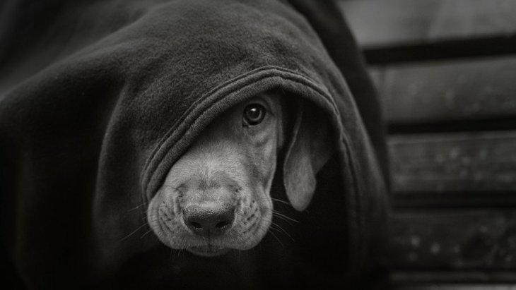 つい犬を叩いてしまう…今すぐやめるべき5つの危険性