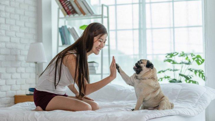 犬は人間の無表情な顔が嫌い?【研究結果】