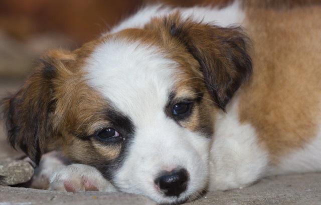 犬の腸内環境が悪化する原因と症状、改善する方法まで