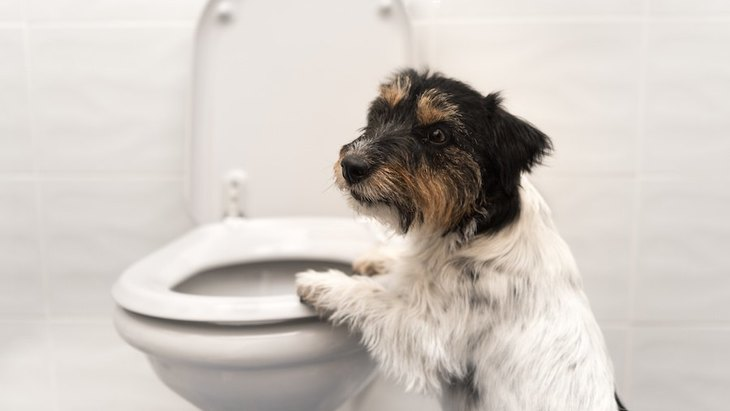 外出から帰ると犬のウンチが床に散らばってる…。対策はある?