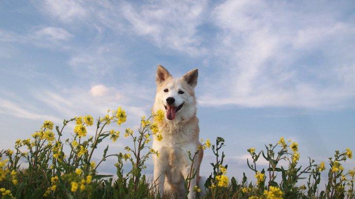 亡くなった愛犬は、いつもあなたのそばで見守ってくれている
