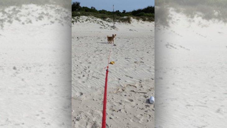 『ボクは泳がない!』飼い主さんとの攻防が気になるツイートが話題♡