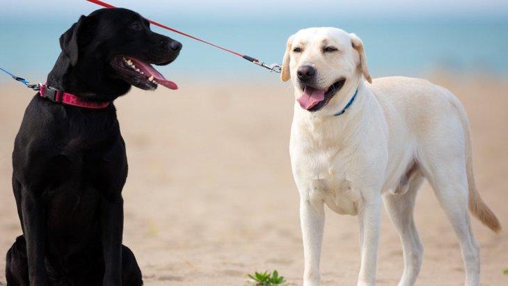 『大型犬あるある』10選