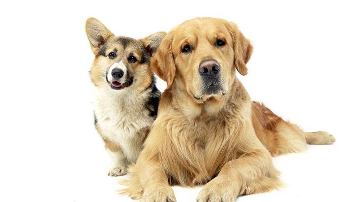 犬にも「カクテルパーティー効果」があるという研究結果